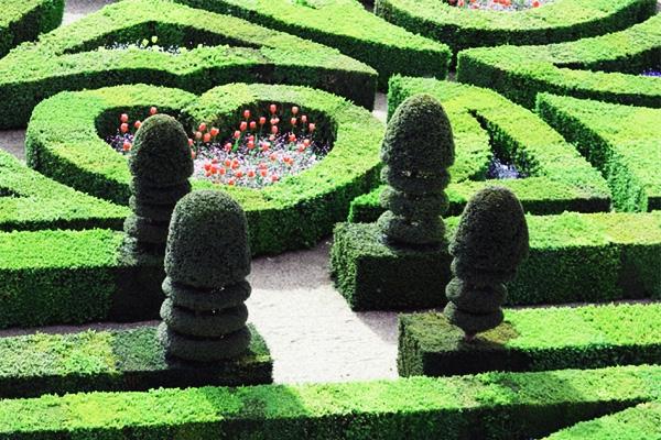 Искусство фигурной стрижки кустарников