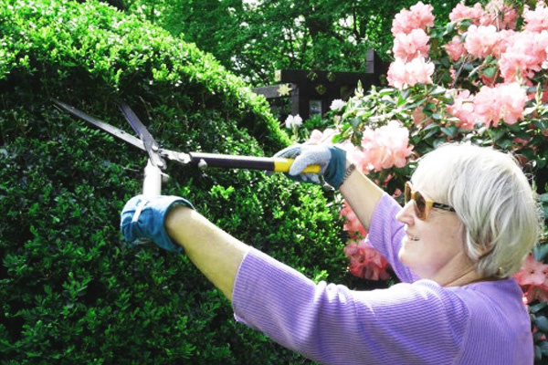 Делаем свою дачу красивой: стрижка кустарников и деревьев